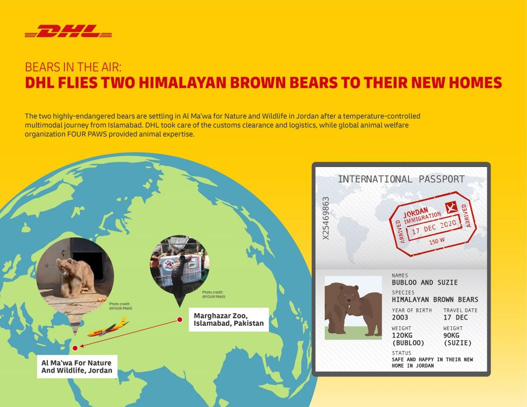 DHL Flies Two Himalayan Brown Bears to their New Home