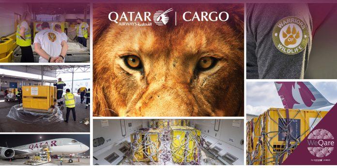 QR Cargo Lions